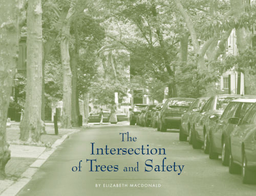 The Intersection of Trees and Safety